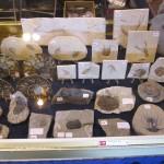2013february2_fossils