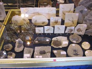 2013february2_fossils_300
